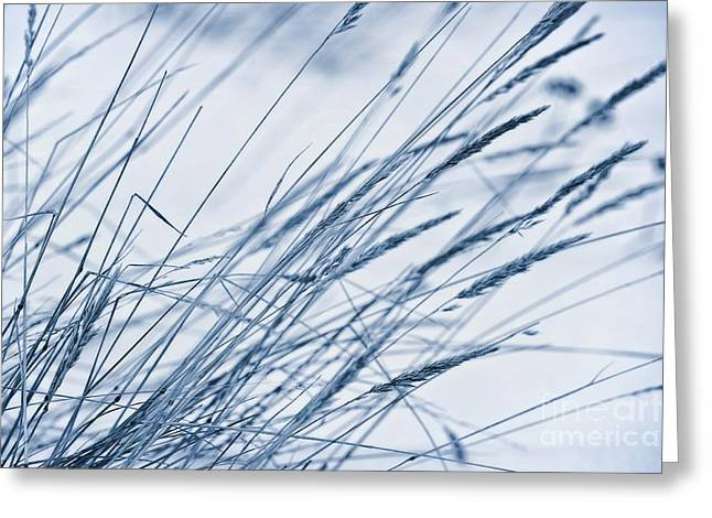 Winter Breeze Greeting Card by Priska Wettstein