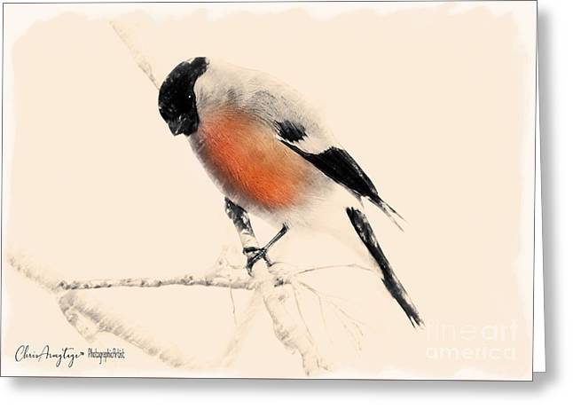 Winter Bullfinch Greeting Card