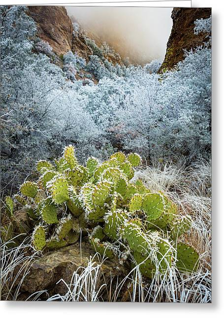 Winter Cacti Greeting Card by Inge Johnsson