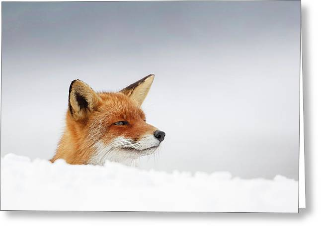 Winter Came - Red Fox In The Snow Greeting Card by Roeselien Raimond