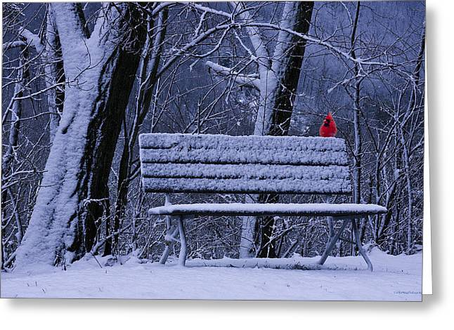 Park Benches Greeting Cards - Winter Cardinal Greeting Card by Ron Jones
