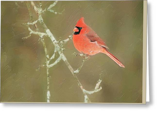 Winter Cardinal Greeting Card
