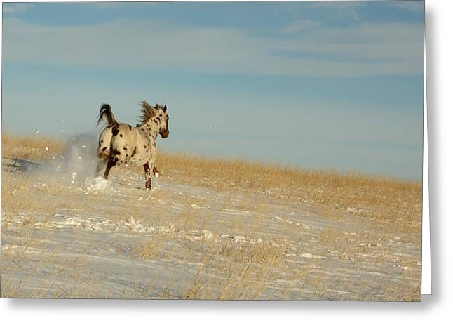 Winter Charger Greeting Card