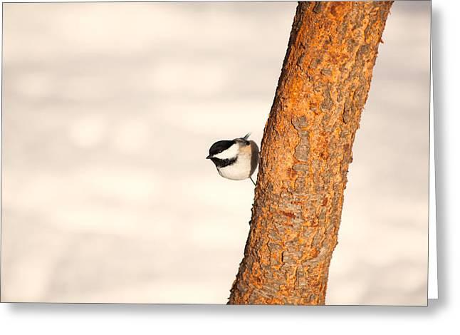 Winter Chickadee Greeting Card by Karol Livote