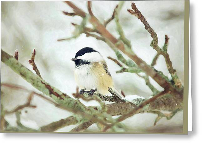 Winter Chickadee Greeting Card