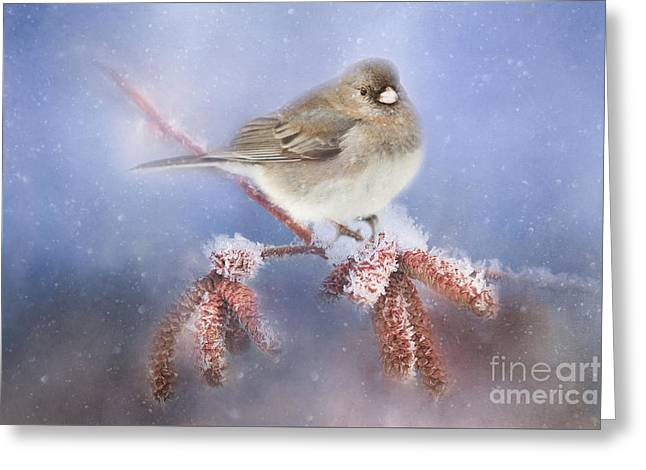 Winter Chill Greeting Card by Darren Fisher