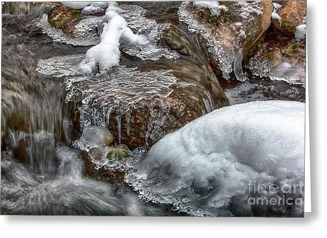 Winter Chill Greeting Card by David Millenheft