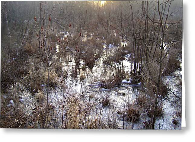 Winter Color Of A Wetland Greeting Card