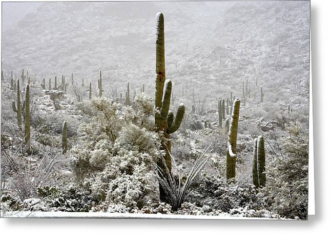 Winter Comes To The Desert  Greeting Card