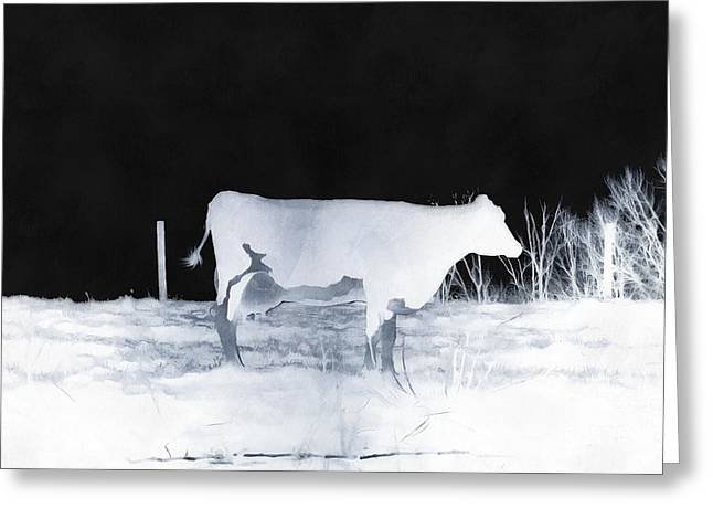 Greeting Card featuring the photograph Winter Cow - Cow by Janine Riley