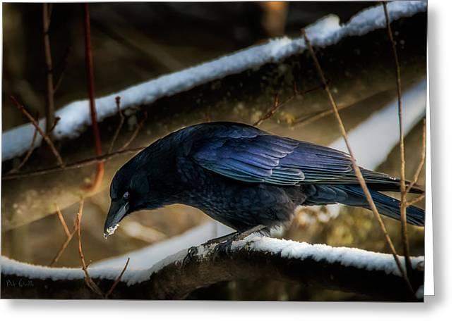 Winter Crow Greeting Card by Bob Orsillo