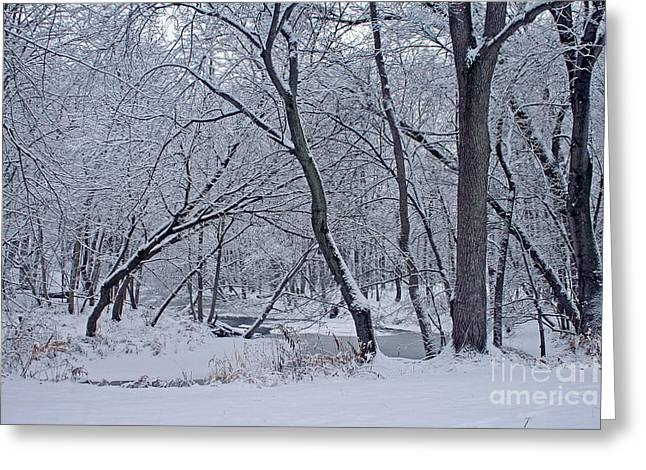 Winter Days Along The Creek Greeting Card by Kay Novy