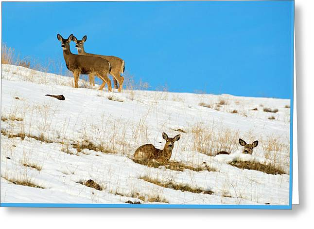 Winter Deer Greeting Card by Mike Dawson