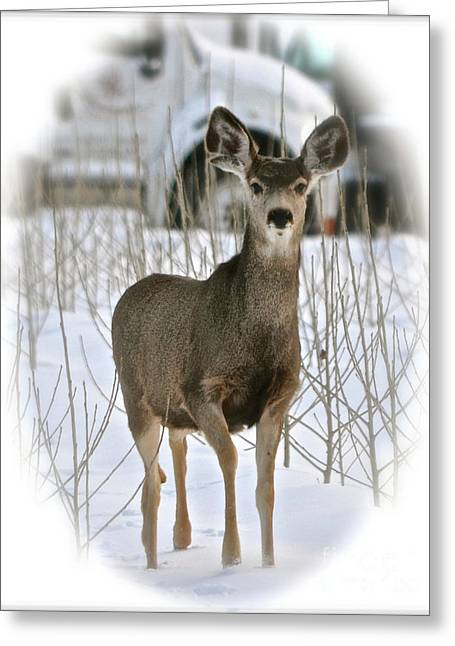 Winter Deer On The Tree Farm Greeting Card
