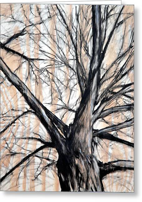 Winter Elm Greeting Card by John Terwilliger