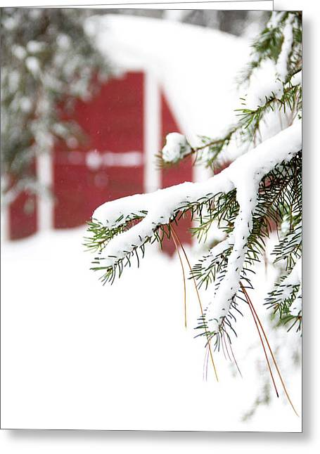 Winter Evergreen Greeting Card