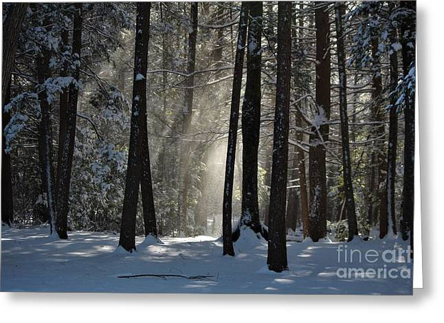 Winter Falling Snow At Bigelow Hollow State Park  Greeting Card
