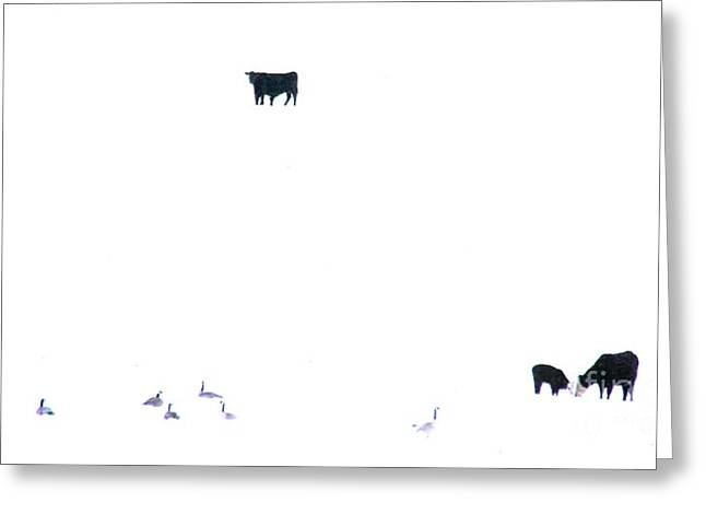 Winter, Feed Zone Greeting Card