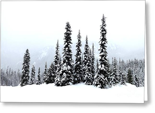 Winter Firs Greeting Card