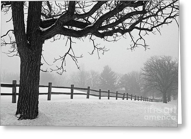 Winter Fog Greeting Card by Kevin McCarthy