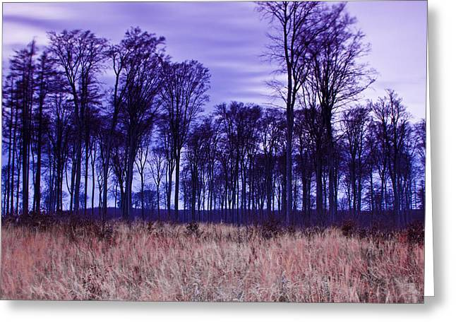 Winter Forest At Sunset In Hungary Greeting Card by Gabor Pozsgai