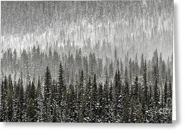 Winter Forest Greeting Card by Brad Allen Fine Art