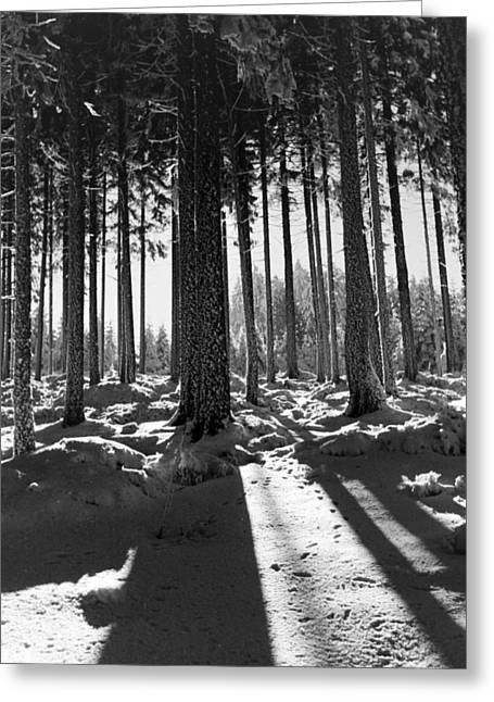 Winter Forest Greeting Card by German School