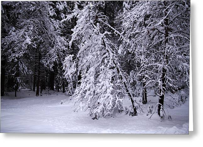 Winter Forest Greeting Card by Lee Chon