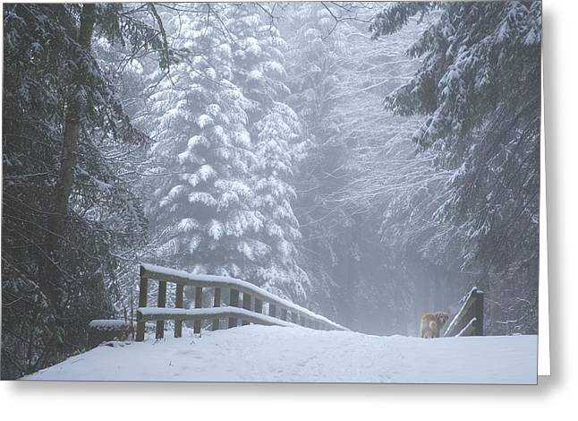 Winter Forest With Golden Retriever Greeting Card