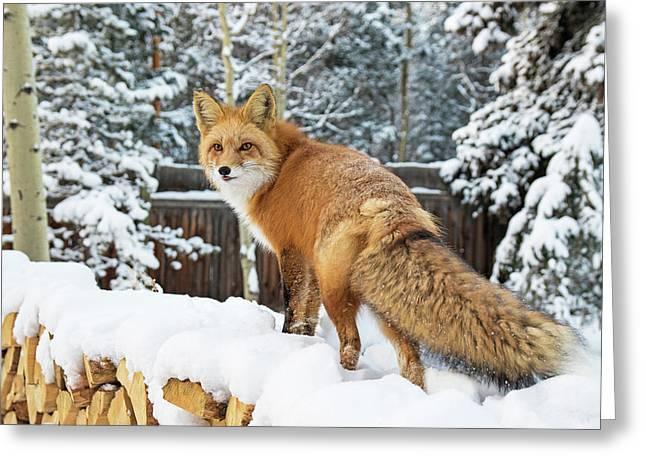 Winter Fox On Woodpile Greeting Card