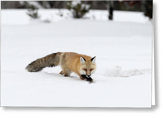 Winter Fox Greeting Card