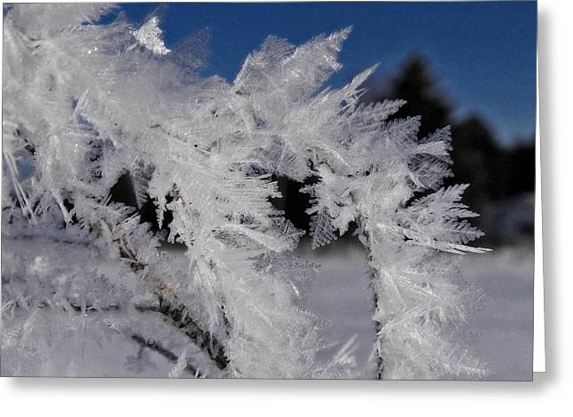 Winter Frost 6 Greeting Card