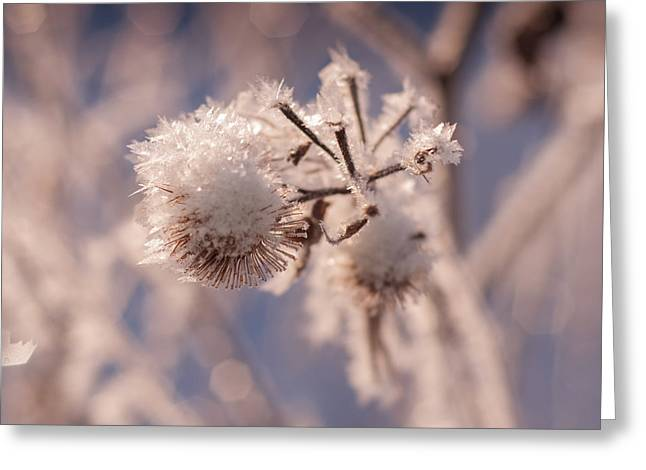 Winter Frost Greeting Card