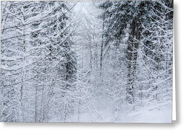 Greeting Card featuring the photograph Winter Glow- by JD Mims