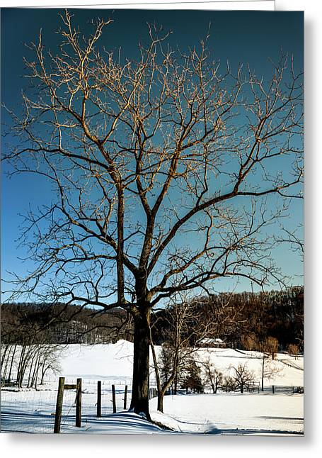 Greeting Card featuring the photograph Winter Glow by Karen Wiles