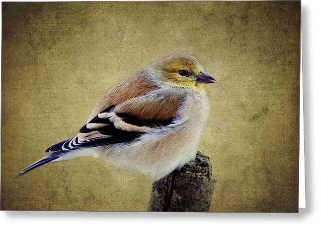 Winter Goldfinch Greeting Card