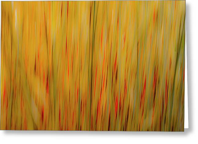 Greeting Card featuring the photograph Winter Grasses #1 by Tom Vaughan