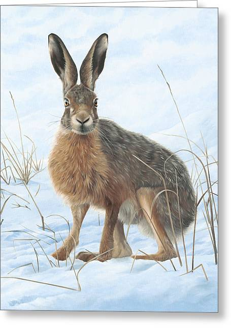 Winter Hare Greeting Card by Clive Meredith