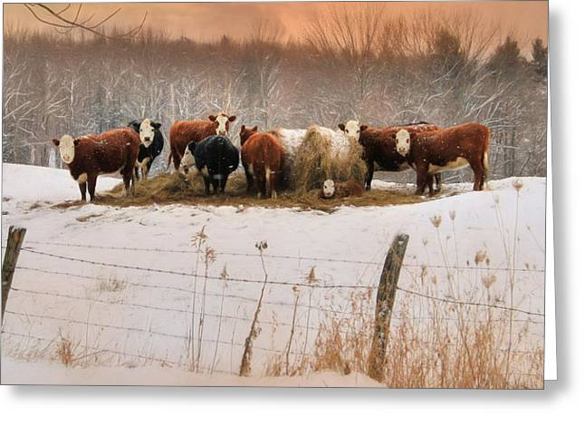 Winter Hay Greeting Card by Lori Deiter