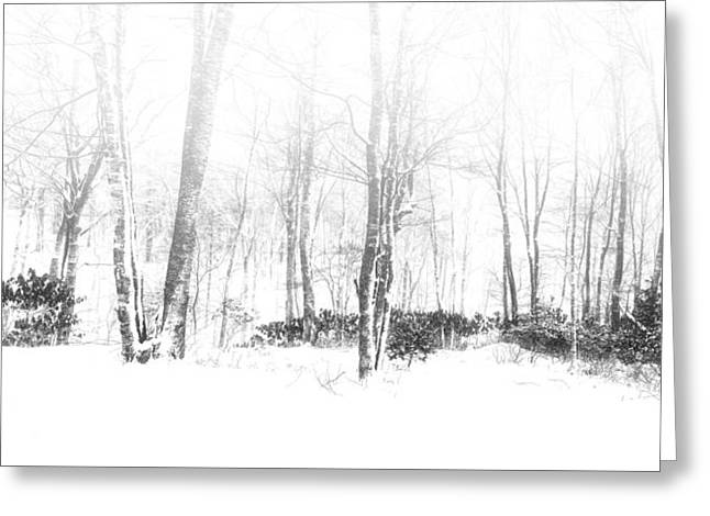 Snowy Forest - North Carolina Greeting Card