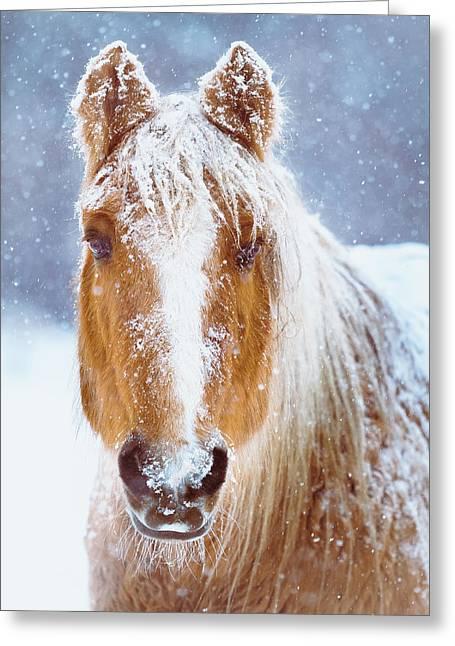 Winter Horse Portrait Greeting Card by Debi Bishop