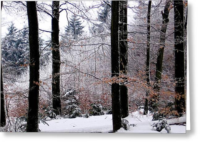 Winter In Krauchthal II Greeting Card by David Ritsema