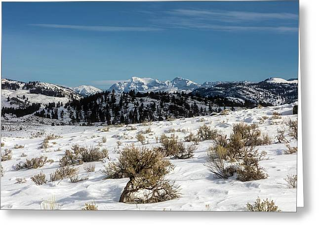 Winter In Lamar Valley - Yellowstone Greeting Card by L O C