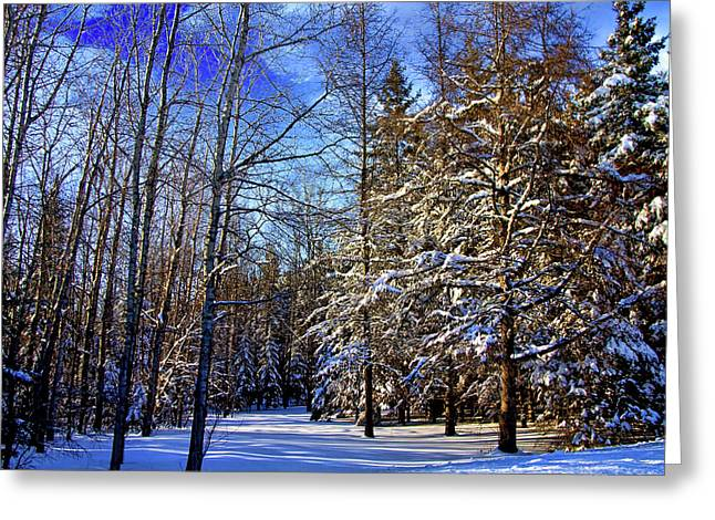 Winter In Maine Greeting Card by Gary Smith