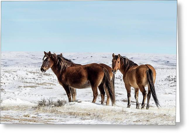 Winter In Sand Wash Basin - Wild Mustangs Greeting Card