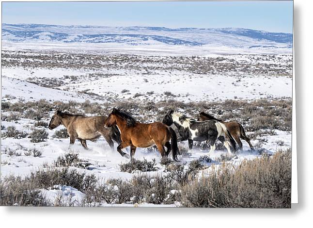 Winter In Sand Wash Basin - Wild Mustangs On The Run Greeting Card