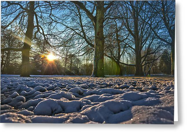 Winter In The Park Greeting Card