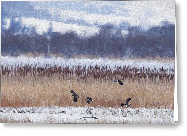 Winter Lapwings Greeting Card by Liz Leyden