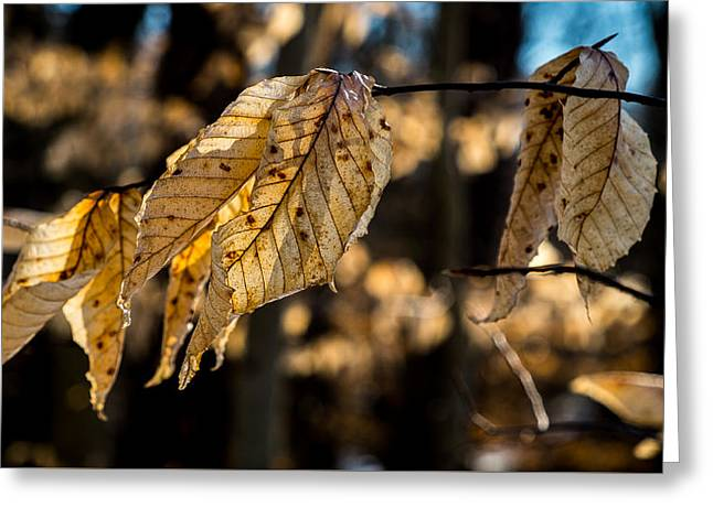 Winter Leaves Left Greeting Card