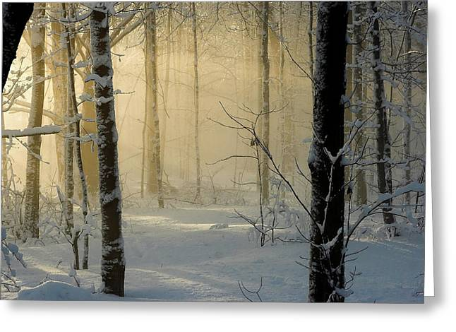 Winter Light Rays Greeting Card by Daniel Cadieux